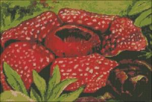 Раффлезия схема вышивки