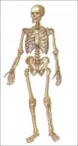 Скелет человеческий. Схема вышивки