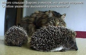 Из жизни котов