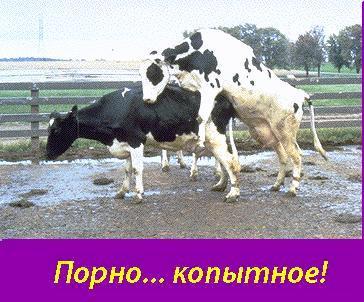 Юмора