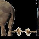Инфантилья зависимость. Слон и колышек.